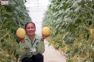 sản xuất nông nghiệp công nghệ cao ở Đồng Xoài thu lợi nhuận cao