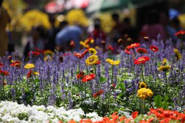 Hội hoa xuân Tao Đàn 2019 mở hội