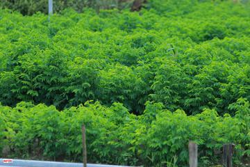 Long An - vùng trồng rau sạch hiệu quả