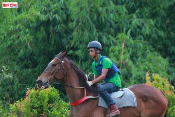 Khám phá trường đua ngựa Thiên Mã