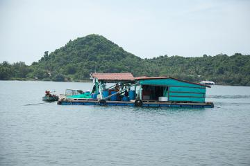 Ra đảo Tiên Hải nuôi ốc hương thu nhập cao