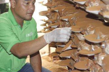 Những công dụng ít biết của nấm linh chi
